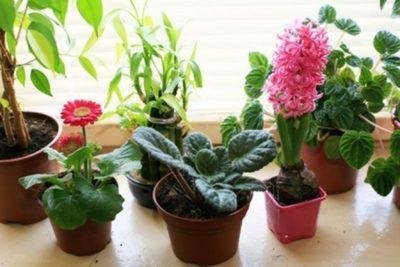 чем подкормить комнатные цветы зимой в домашних условиях
