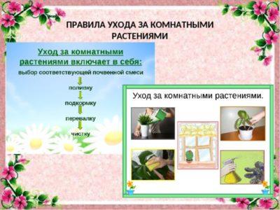 условные обозначения по уходу за комнатными растениями