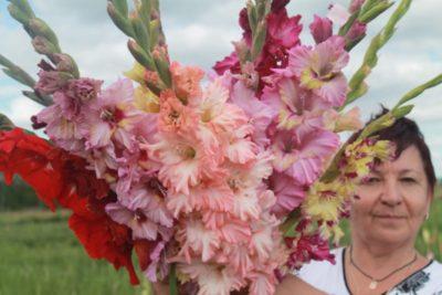 гладиолусы когда цветут