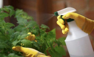 дрожжи для удобрения комнатных растений