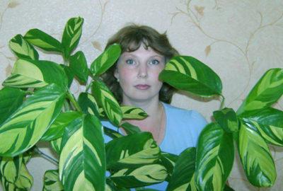 калатея сохнут и скручиваются листья