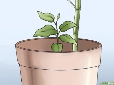 как посадить клематис весной