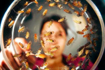 мошки в орхидеях как избавиться