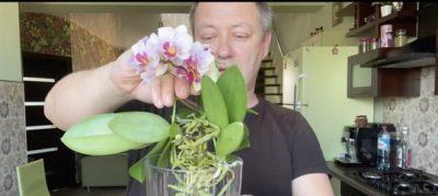 как посадить орхидею из отростка