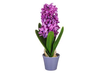 гиацинт сколько по времени цветет