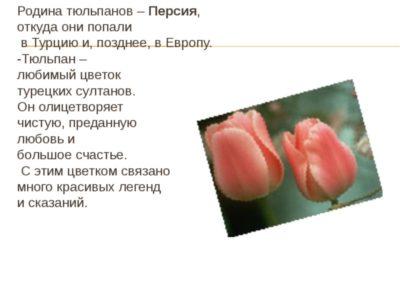 каково строение цветка тюльпана