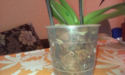как сделать тепличку для орхидеи