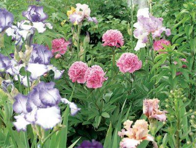 садовые цветы для полутени