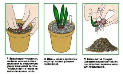 посадка и пересадка комнатных растений