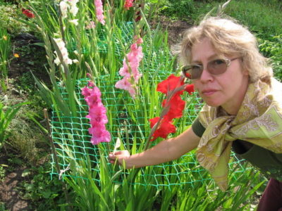 гладиолусы как красиво посадить