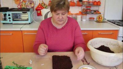 как посадить лобелию в торфяные таблетки