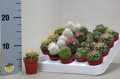 во что посадить кактус