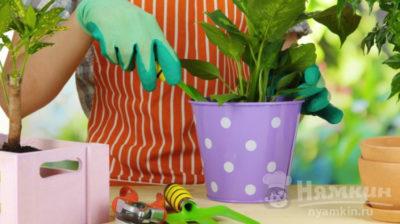 пересадка комнатных растений в мае