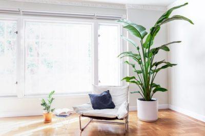 пышные комнатные растения