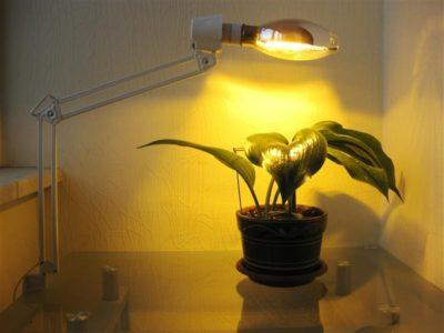 освещение для комнатных растений