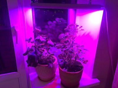 как влияет свет на рост комнатного растения