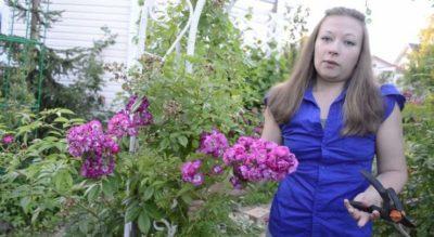 посадка роз осенью с открытой корневой системой