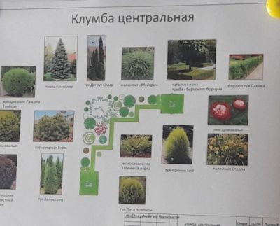 схемы цветников с пионами