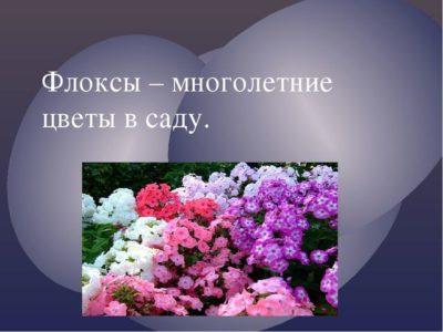 классификация цветочно декоративных растений