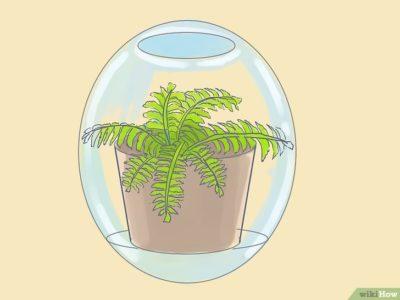 как посадить папоротник в горшок