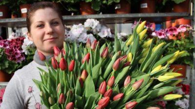 выращивание тюльпанов в домашних условиях к 8 марта