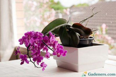 орхидеи как ухаживать чтобы цвели