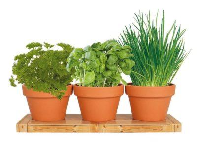декоративные растения для дачи