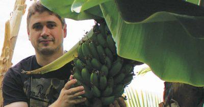 как посадить банан в домашних условиях