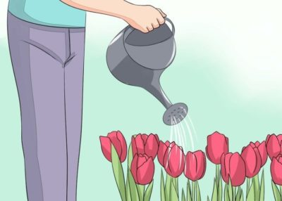 посадка тюльпанов на урале осенью