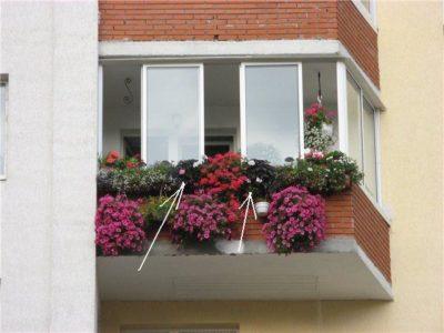 как сажать настурцию на балконе
