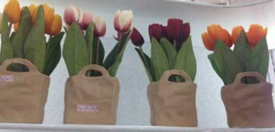 как посадить тюльпаны дома в горшке