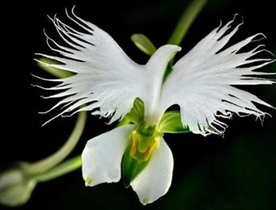 цветок похожий на орхидею