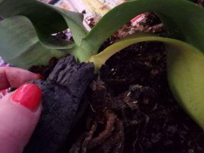 как сделать грунт для орхидей