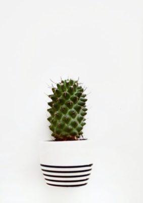 комнатные растения с шипами