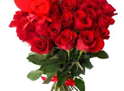 красно белые розы