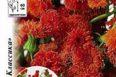 книфофия выращивание из семян