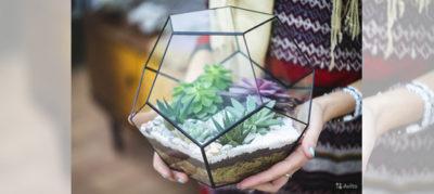 как посадить суккуленты в стеклянной вазе