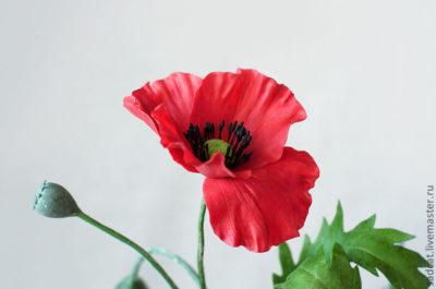 строение цветка мака