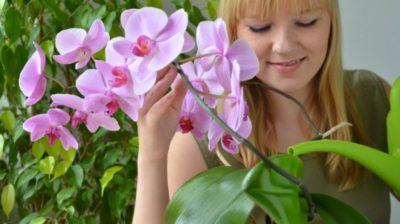 как ухаживать за орхидеей зимой