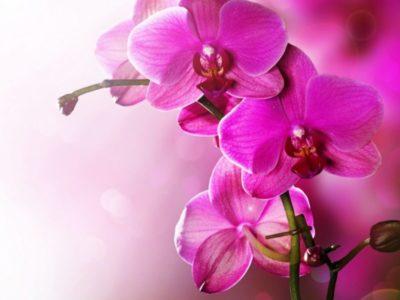 сколько видов орхидей