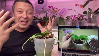 подарили орхидею как ухаживать
