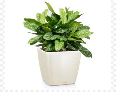 какие комнатные растения нельзя держать дома