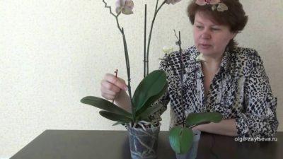 как правильно выбрать орхидею