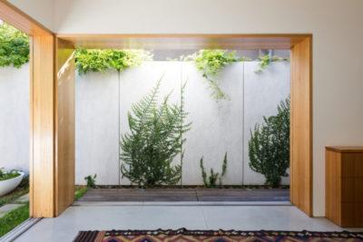 вьющиеся декоративные растения