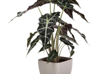 декоративно лиственные комнатные растения