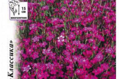 гвоздика травянка выращивание