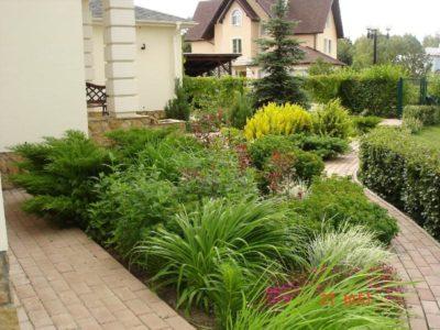 посадка декоративных кустарников
