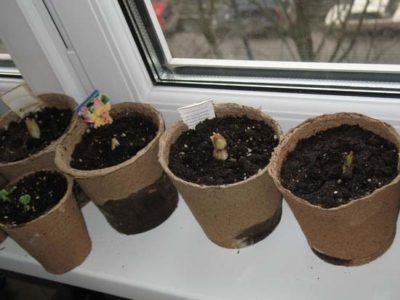 как вырастить из семян цветы