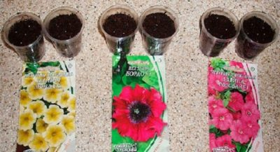 какие цветы можно посадить в августе семенами в открытый грунт