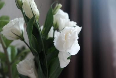как цветет эустома